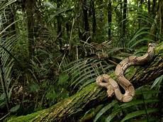 Tetap Berhati Hati Jika Berwisata Ke Pedalaman Di Kalimantan