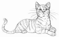 Katzen Ausmalbilder Warrior Cats Frischbeute In Blattgr 252 Ne Und Blattfall 2018 187 Warrior Cats
