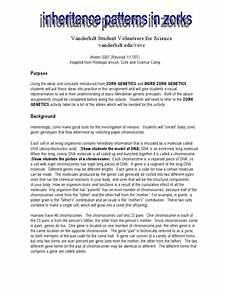 more zork genetics lesson plans worksheets reviewed by teachers