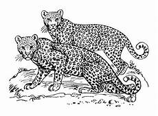 Ausmalbilder Erwachsene Leopard Big Cat Line Drawings