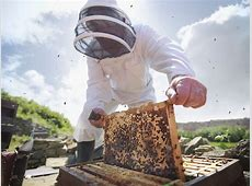 Step by Step Guide for Inspecting a Honey Bee Hive