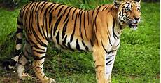 Haiwan Besar Zoo Kemaman