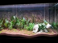 fleischfressende pflanzen im terrarium ratgeber neu