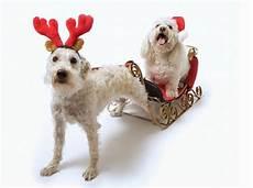 laugh gags animals are preparing for
