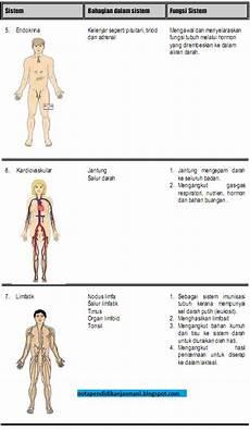 Sistem Tubuh Badan Jenrysaiparudin S