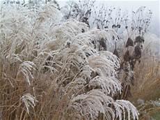 Gräser Im Winter - winterliche g 228 rten garten ch