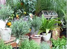kuebelpflanzen fuer terrasse topf und k 252 belpflanzen f 252 r balkon und terrasse