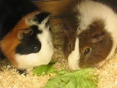 maqi f 252 r tierrechte gegen speziesismus