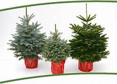 Tannenbaum Im Topf Kaufen Weihnachten 2019