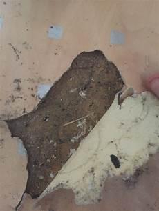 asbest im boden asbest im fu 223 bodenbelag gesundheit fussboden