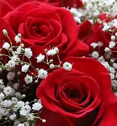 merry christmas roses photo sharing