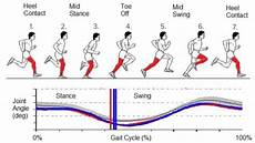 Hamstring Injury Recovery Anatomy And Runners Risks