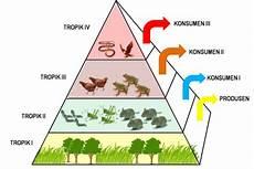 Gambar Rantai Makanan Tingkat Trofik Dan Piramida Ekologi