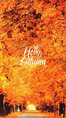 Iphone Cozy Autumn Wallpapers iphone orange fall nature autumn warm seasons cozy leaves