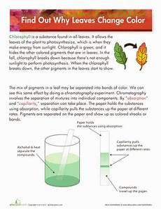 science worksheets leaves 12281 why do leaves change color science fair experiments science third grade science