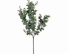eukalyptus winterhart kaufen kunstpflanze mica eukalyptus h 65 cm bei hornbach kaufen