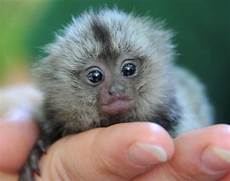 50 cute baby animals that will melt even stone cold heart