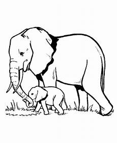 elephant and baby elephant looking for fresh grass