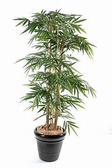 meilleur plante pour appartement grande plante interieur