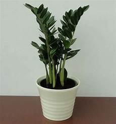 Pflanzen F 252 R Dunkle Zimmer Unser Lagerhaus Whg