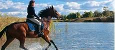 Op Versicherung Pferd - g 252 nstige pferde op versicherung direkt vergleichen und