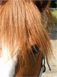 ponys zu verschenken ponys kleinpferde kaufen verkaufen zu verschenken