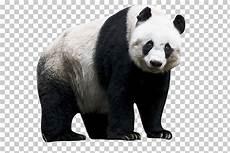 Wow 16 Gambar Kartun Panda Png Gani Gambar