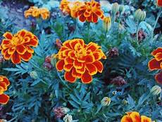 flower images hd gif animated free gif flower animated gifs you will