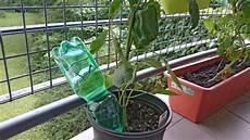 pflanzen bewässern mit plastikflasche blumen gie 223 en im urlaub so einfach ist es wirklich anleitung diybook ch