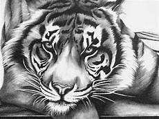 106 besten coloring tigers bilder auf katzen