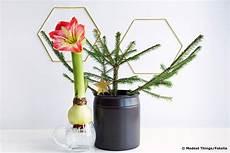 Amaryllis Im Glas Ziehen So Gelingt Es Ohne Erde