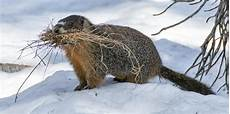 Tiere Im Winter Geolino