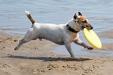 Welches Hundefutter Ist Das Beste - hundefutter was ist das beste
