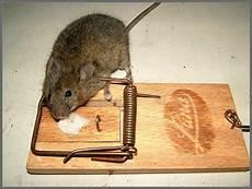 Maus Im Haus Weg Die Maus Foto Bild Tiere Wildlife