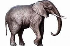 Gambar Gambar Gajah Lengkap