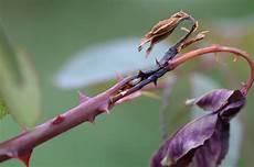 löcher in rosenblättern gesunde umweltbundesamt