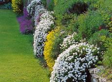 plantes vivaces pour talus jardin en pente vivaces pour fleurir un mur
