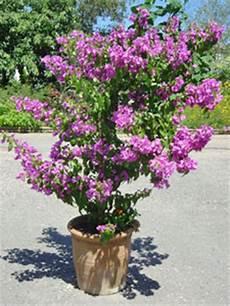 quel arbuste mettre en plein soleil