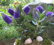Neuer Gartentraum Blau Wei 223 Er Sommer