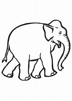 ausmalbild junger elefant zum ausdrucken
