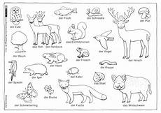 Ausmalbilder Igel Wald Natur Wald Tiere Pflanzen Henkel Wald Tiere Und