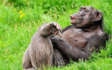 Funny Baboon Pics