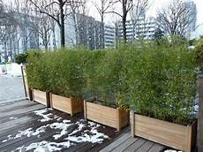haie pour terrasse jardini 232 re de bambous pendant la mauvaise saison terrasse