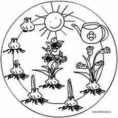kinder malvorlagen narzisse pflanzen mandalas im kidsweb de