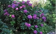 blumen für den schatten schattengarten plants pflanzen garten