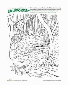 rainforest animals worksheets elementary 13860 rainforest worksheet education