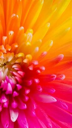 flower wallpaper iphone colorful tropical flowers iphone 6 plus wallpaper 21681