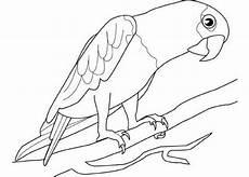 malvorlagen papagei zeichnen