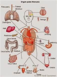 8 Organ Tubuh Manusia Beserta Fungsinya Referensi Ku