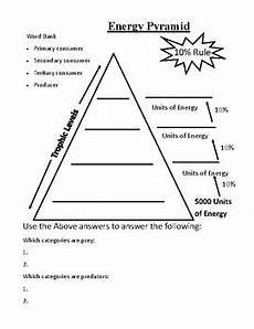 energy pyramid practice worksheet by tpt